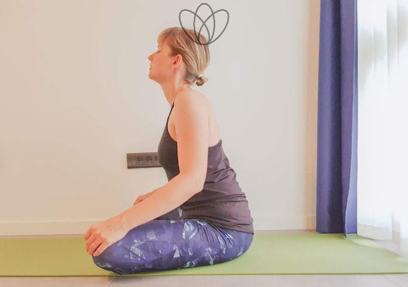 yogamaya_sitzende_katze_yoga